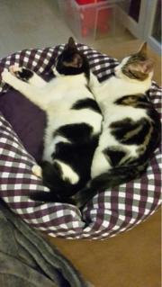 2 Katzenkinder suchen