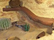 2 Leopardengeckos mit