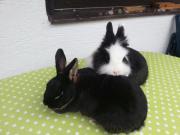 2 süße Kaninchen