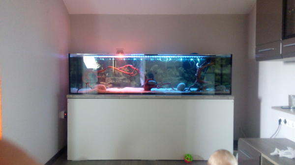 200x50x50 aquarium mit unterschrank in schnaittenbach. Black Bedroom Furniture Sets. Home Design Ideas