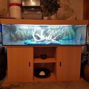 300 L Aquarium