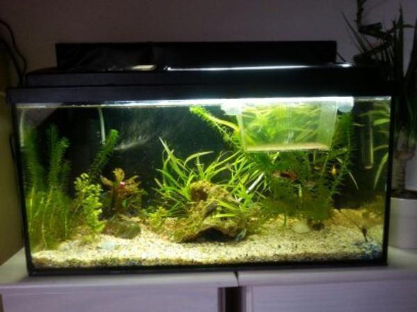 60l aquarium mit kies in wei innenfilter ablaichkasten. Black Bedroom Furniture Sets. Home Design Ideas