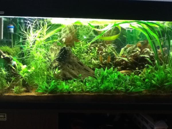 aquarium fische zubeh r in ettlingen kaufen bei deine. Black Bedroom Furniture Sets. Home Design Ideas