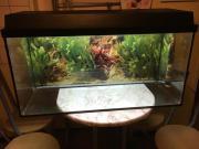 Aquarium 60 cm