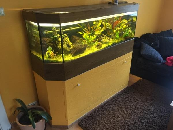 600l aquarium neu und gebraucht kaufen bei. Black Bedroom Furniture Sets. Home Design Ideas