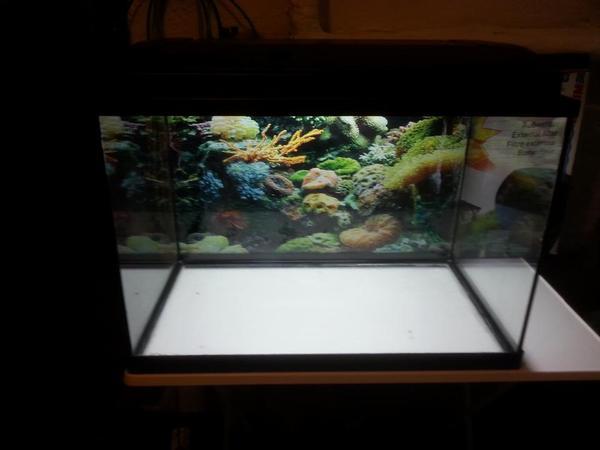 aquarium fische zubeh r in tigheim kaufen bei deine. Black Bedroom Furniture Sets. Home Design Ideas