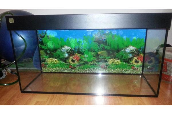 aquarium fische zubeh r in hamburg kaufen bei deine. Black Bedroom Furniture Sets. Home Design Ideas