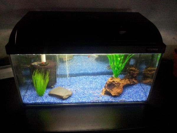 aquarium fische zubeh r in sternenfels fische aquaristik kaufen und verkaufen ber. Black Bedroom Furniture Sets. Home Design Ideas