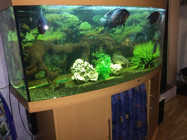 450l aquarium neu und gebraucht kaufen bei. Black Bedroom Furniture Sets. Home Design Ideas