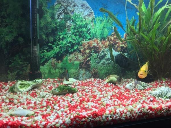 aquaristik in kammerstein kaufen bei deinetierwelt. Black Bedroom Furniture Sets. Home Design Ideas