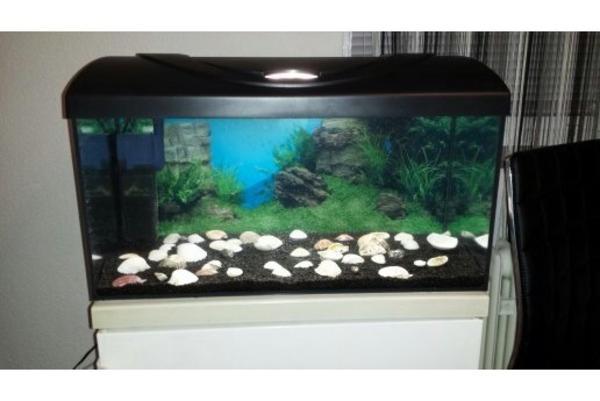 aquarium mit komp zubeh r 6 fische. Black Bedroom Furniture Sets. Home Design Ideas