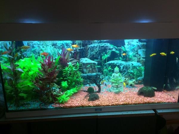 aquarium mit pflanzen fischen kies erde deko und fischen in stuttgart fische aquaristik. Black Bedroom Furniture Sets. Home Design Ideas