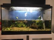 Aquarium Set Eheim