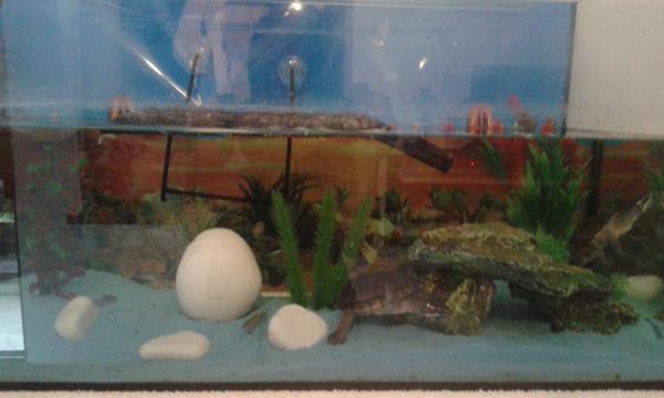 aquarium top gelegenheit in h chst fische aquaristik kaufen und verkaufen ber private. Black Bedroom Furniture Sets. Home Design Ideas