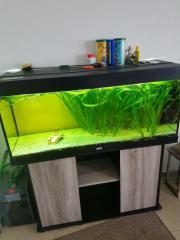 Aquarium von juwel