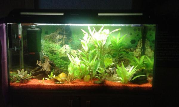 geschenkt kleinanzeigen aquarium fische zubeh r deine. Black Bedroom Furniture Sets. Home Design Ideas