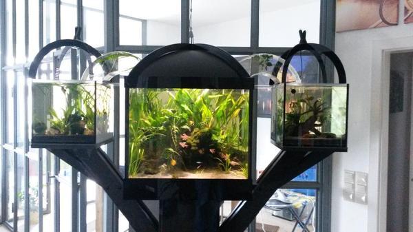 au ergew hnliches designer aquarium in herxheim fische. Black Bedroom Furniture Sets. Home Design Ideas