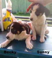 Becky und Sunny