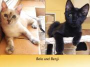 Bela und Benji