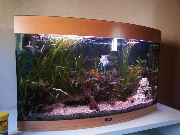 biete aquarium juwel vision 180 l gebogene frontscheibe in aalen fische aquaristik kaufen. Black Bedroom Furniture Sets. Home Design Ideas