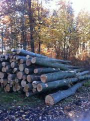 Brennholz günstig für