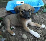 Daisy,4 Monate,