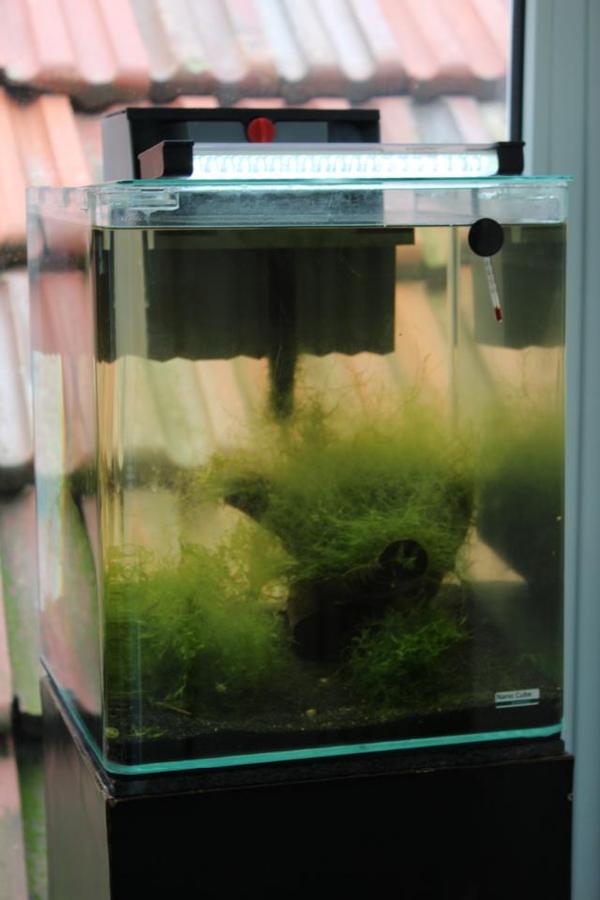 dennerle nano aquarium 30 liter in westheim fische aquaristik kaufen und verkaufen ber. Black Bedroom Furniture Sets. Home Design Ideas