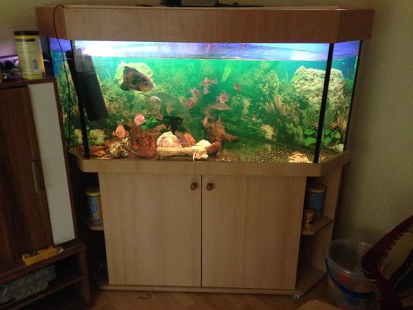 dreieck aquarium ca 450 liter in ingelheim fische aquaristik kaufen und verkaufen ber. Black Bedroom Furniture Sets. Home Design Ideas