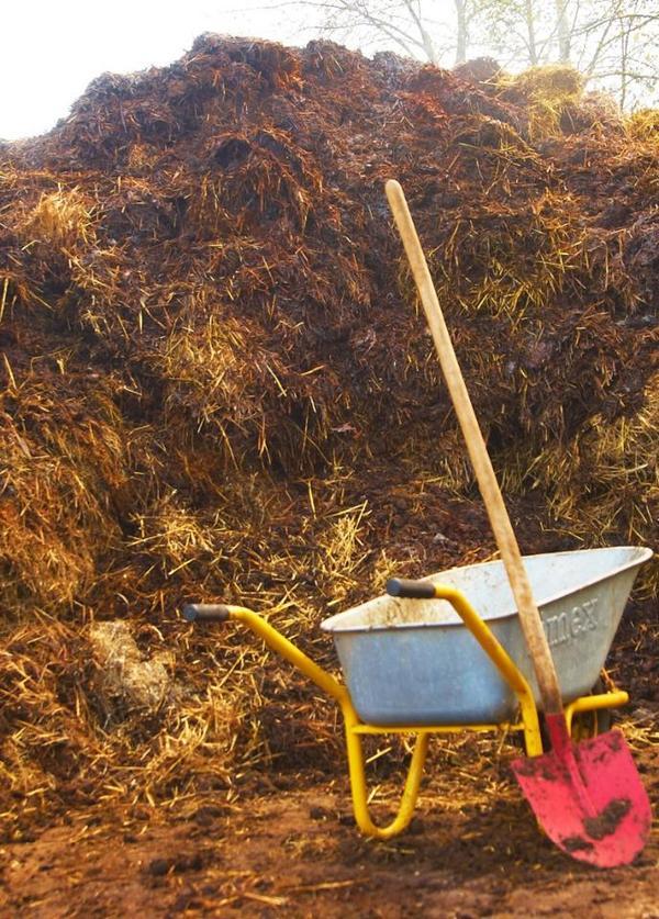 d nger aus pferdemist abzugeben biogas dung biomasse d nger kompost humus in sch naich. Black Bedroom Furniture Sets. Home Design Ideas