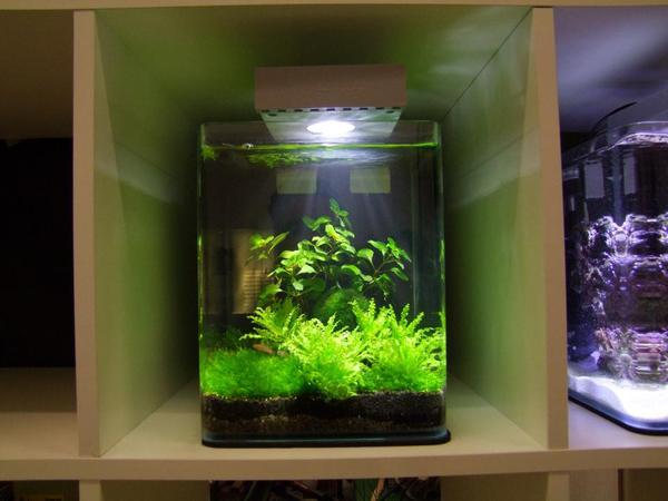 Eingerichtete nano aquarien s salzwasser in for Salzwasser aquarium fische