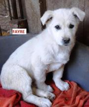 FAYRE, ca 4