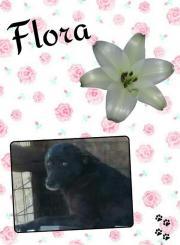 Flora möchte endlich