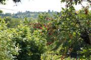Freizeit Gartengrundstück Stuttgart