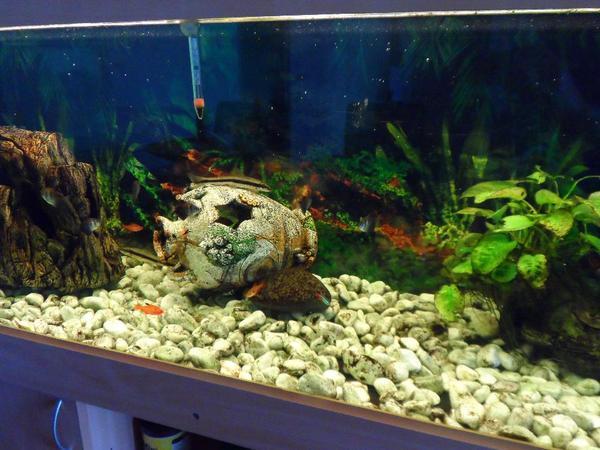 gebrauchtes aquarium kaufen gebrauchtes aquarium 360 l mit unterschrank in mannheim fische. Black Bedroom Furniture Sets. Home Design Ideas