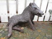 Hingucker-Rarität: Wildschwein