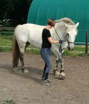 Horsemanship / Bodenarbeit