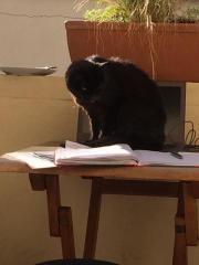 Hübsche schwarze Katzenseniorin