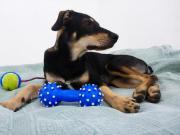 Hund 2 Monate