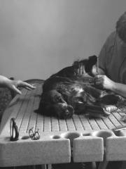 Hundefriseuse - Doggroomer