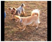 Hundepension littlefamily