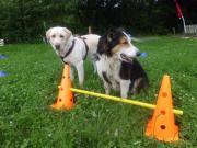 Hundetraining / Hundeschule Spaß