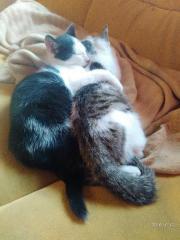 Junge Katzen in