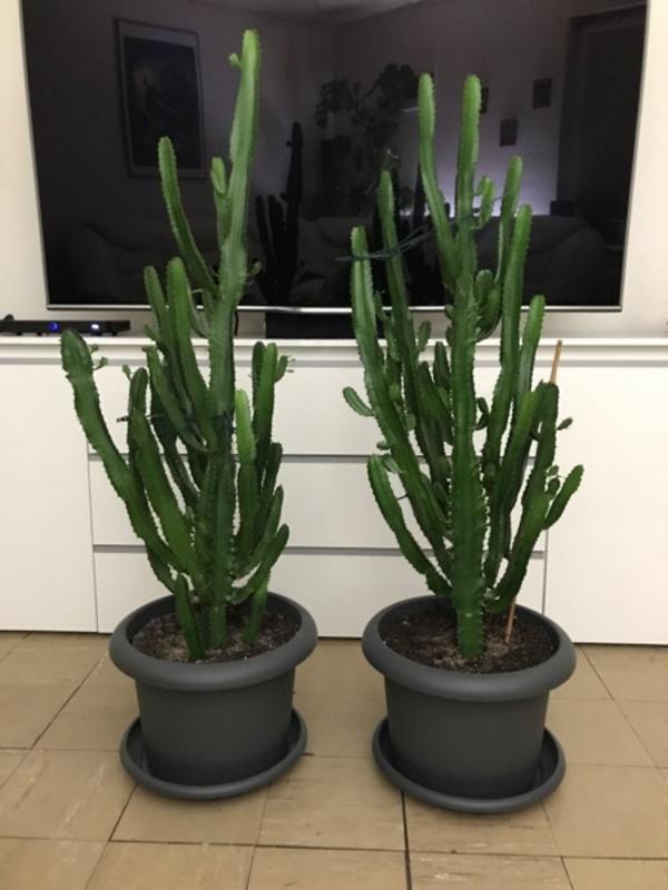 pflanzen b ume str ucher pflanzen garten berlin gebraucht kaufen. Black Bedroom Furniture Sets. Home Design Ideas