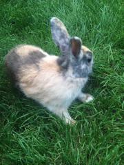 Kaninchen mit Stall