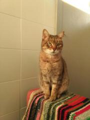 Katze Marina zu