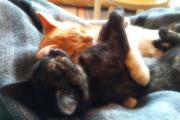 Katzenkinder Maru & Samy,