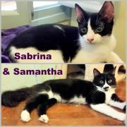 Katzenkinder Samantha & Sabrina,