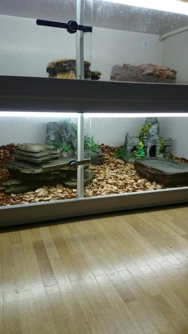 mit terrarium in kirchheim reptilien terraristik kaufen. Black Bedroom Furniture Sets. Home Design Ideas