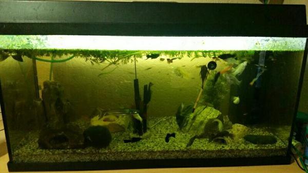 komplett aquarium mit fischen in eppingen fische aquaristik kaufen und verkaufen ber private. Black Bedroom Furniture Sets. Home Design Ideas