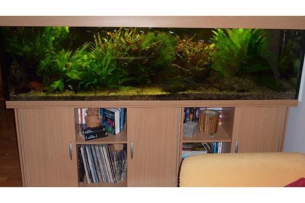 komplett eingerichtetes aquarium 200x50x60 600l in hofheim fische aquaristik kaufen und. Black Bedroom Furniture Sets. Home Design Ideas